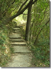 The shady pathways of the Hong Kong Trail